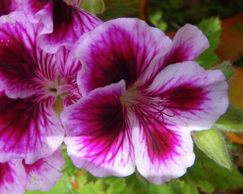 Tropical Flower On The Haleakala Volcano Maui Hawaii
